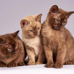 aprire un allevamento di gatti